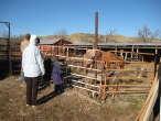 Uncle Kenn's horses