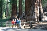 Sequoias_-_Kim,_Beth,_Ben,_Alonna