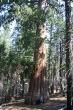 Sequoias_-_Ben